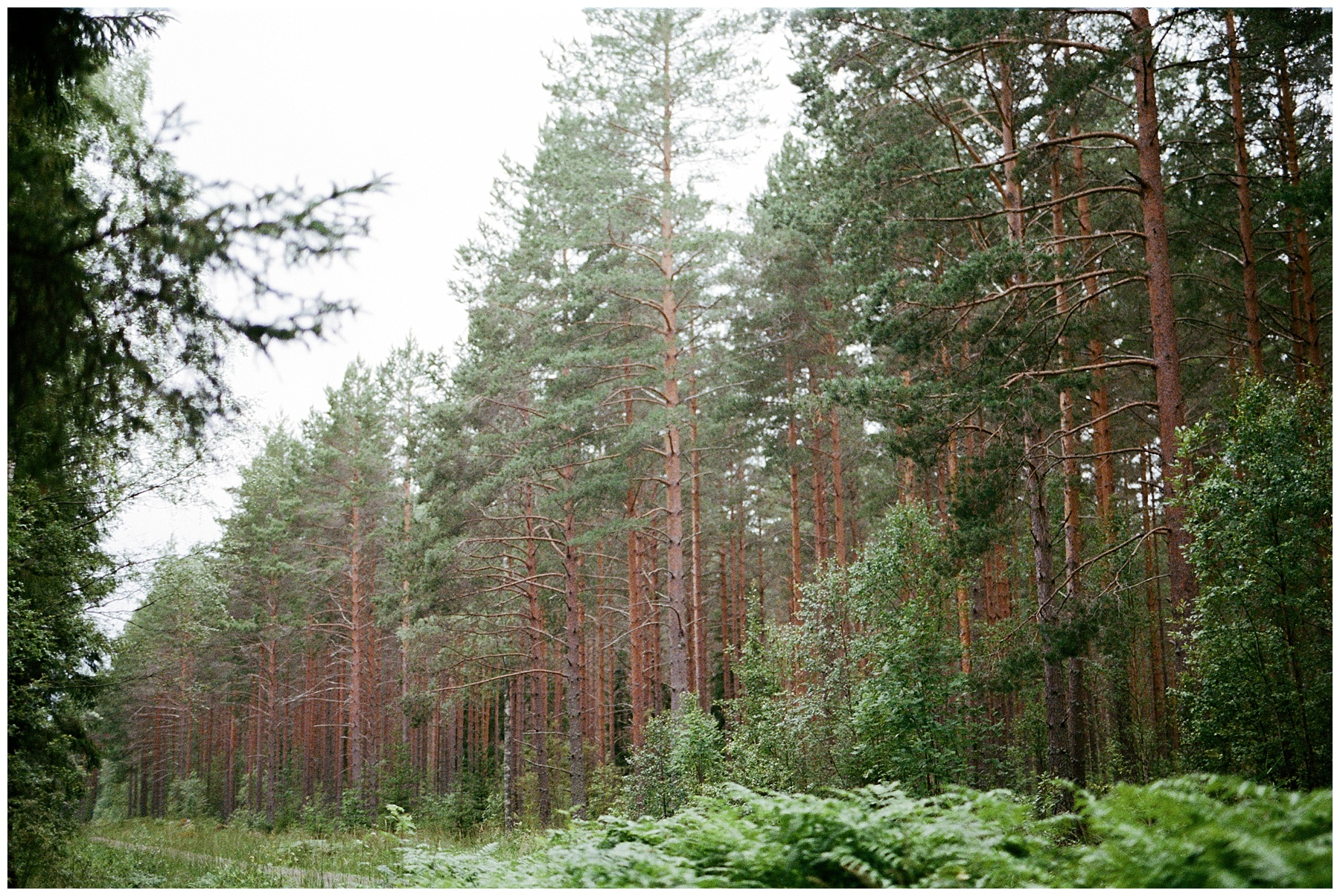 forest wedding in the swedish countryside